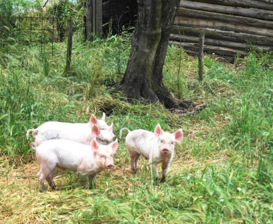 fattoria didattica luisa viterbo-min