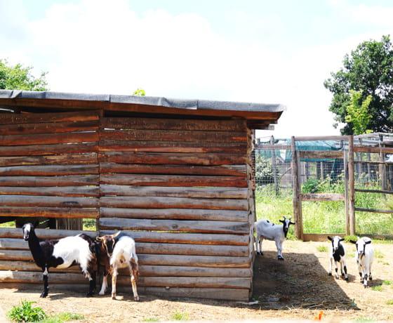 fattoria didattica luisa viterbo(2)-min