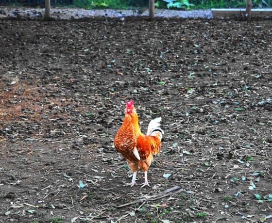 fattoria didattica luisa viterbo(5)-min