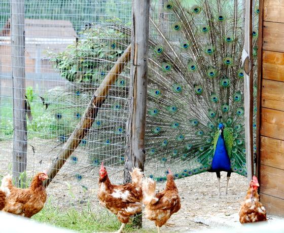 fattoria didattica luisa viterbo(7)-min