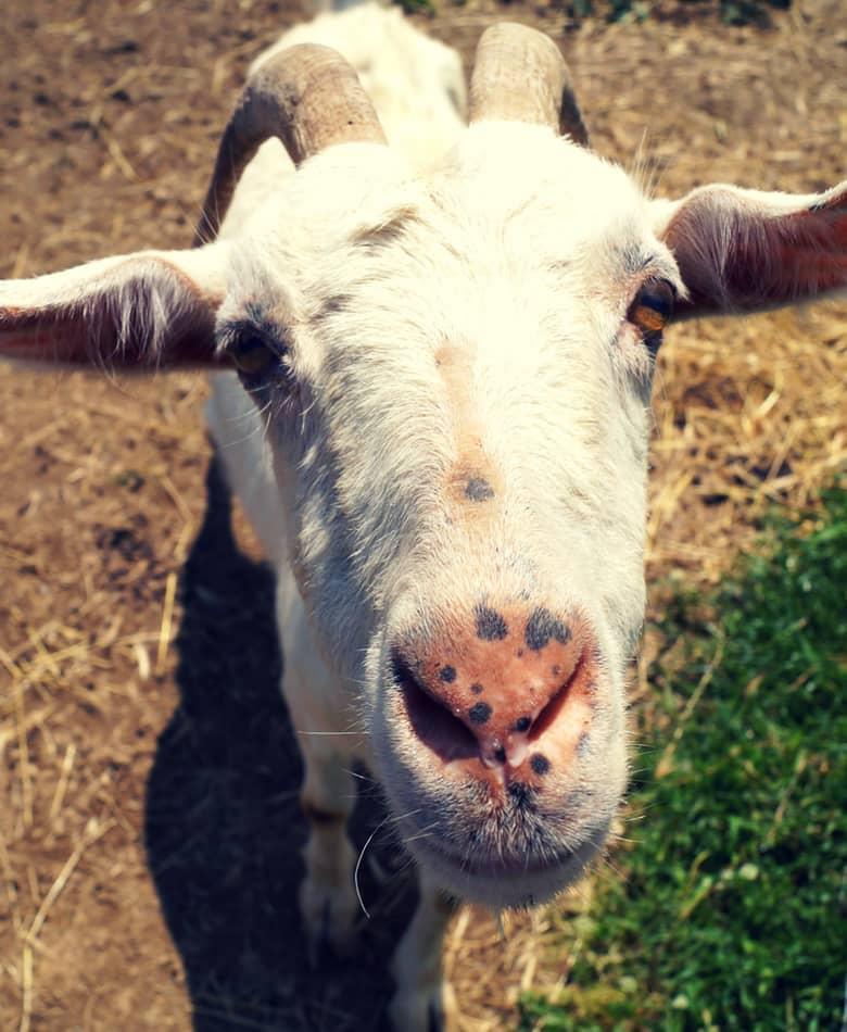fattoria didattica viterbo